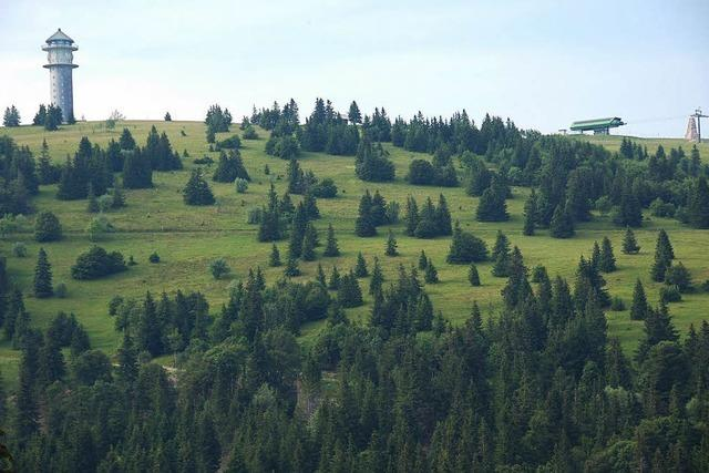 Zwölf Hektar fürs Ökokonto