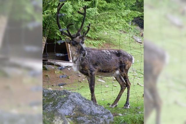 Bei Rudolph, dem Rentier