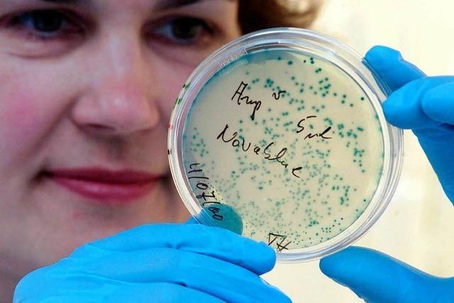 Colibakterien verunreinigen Trinkwasser in Schwörstadt