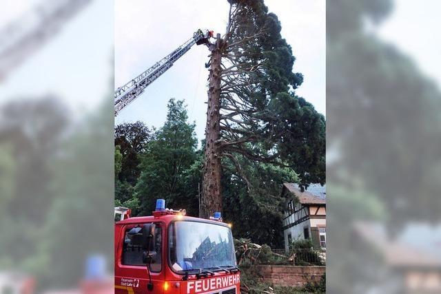 Ein Blitzschlag sprengt gewaltigen Mammutbaum