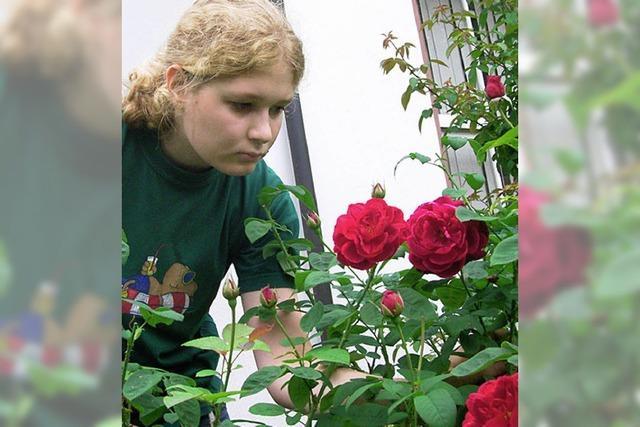 Stadt will an Blumenschmuck sparen