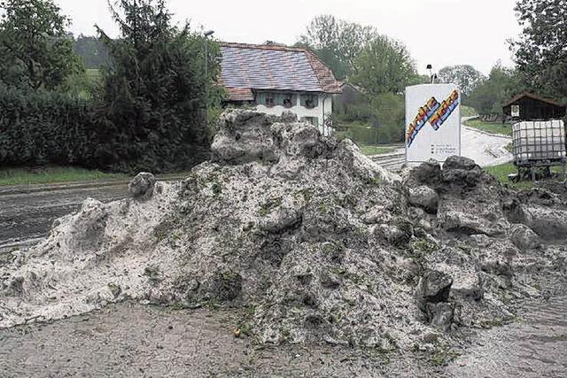 Hagelsturm mäht Maisfelder nieder