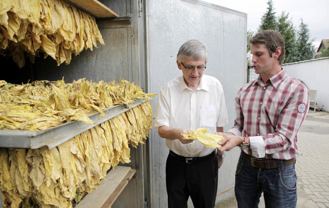 Jochen Adam (rechts) zeigt dem Regieru...in Tabakblatt aus dem Trocknungsofen.   | Foto: Christoph Breithaupt