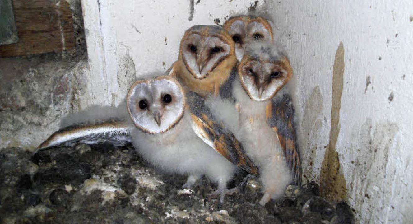 In diesem Jahr sind fünf Jungtiere ges...un hat  vier vor die Kamera bekommen.   | Foto: privat