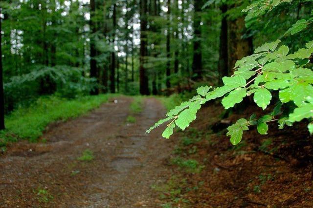 Der Müll soll wieder aus dem Wald verschwinden