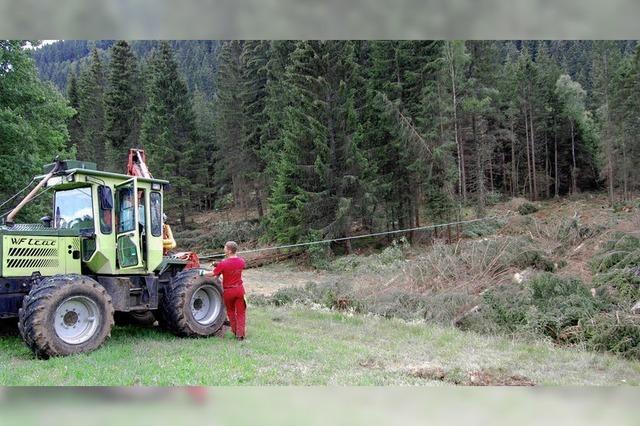 Waldriegel im Urseetal wird gefällt