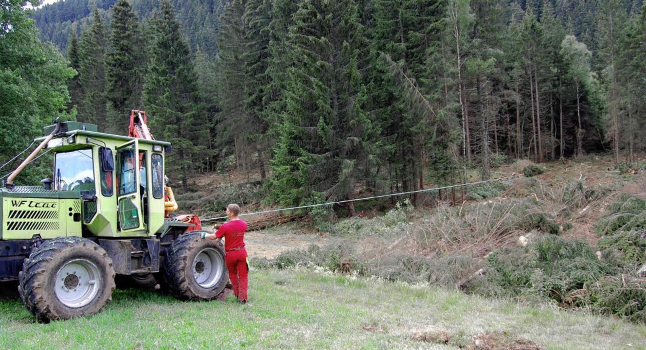 Waldrodung im Urseetal  | Foto: Manfred-G. Haderer