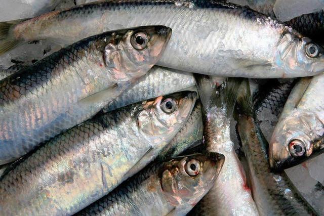 Listerien im Fisch: Konserven aus Willstätt unter Verdacht