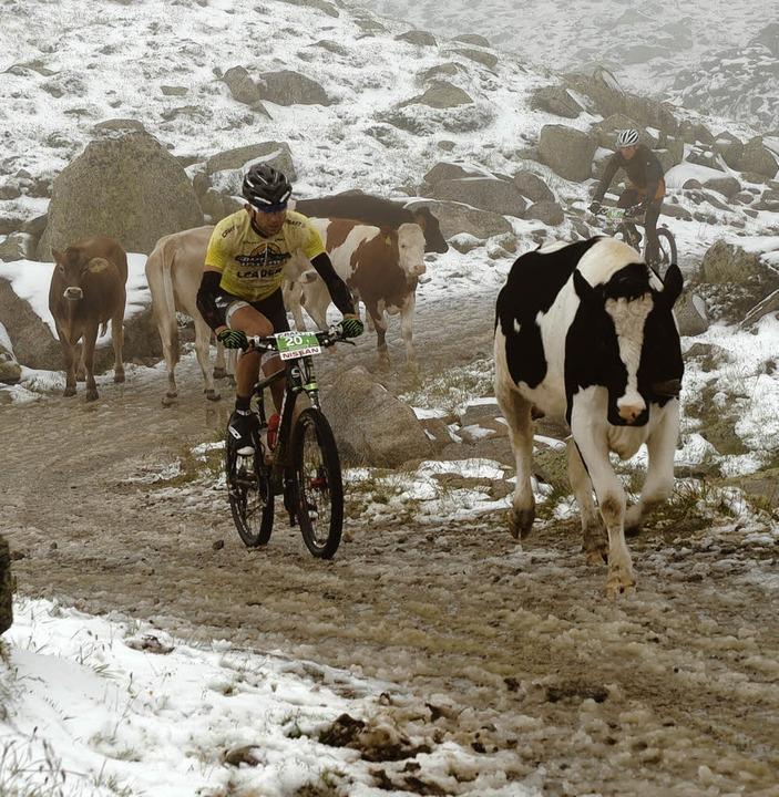 Als wären die Berge nicht schon proble... und tierischen Begleitern zu kämpfen.  | Foto: Craft Bike Transalp powered by Nissan/Peter Musch