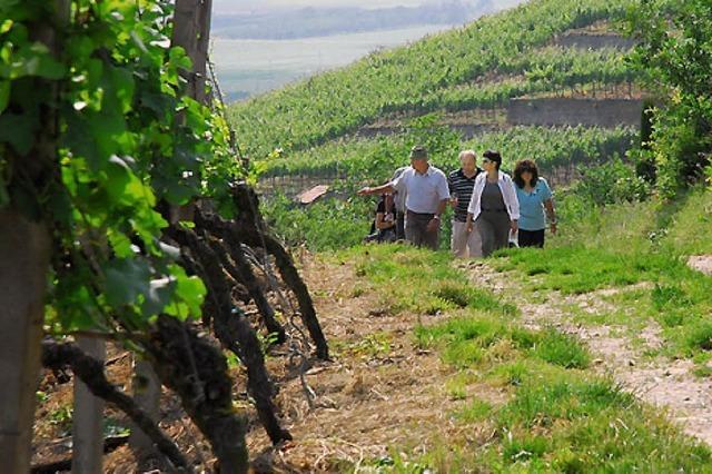 Herbstliche Weinwanderung