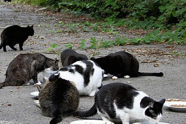Tierschützer kümmern sich um wilde Katzen