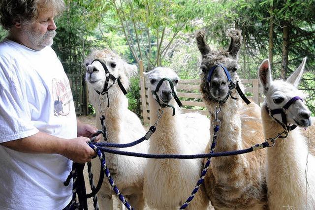 Pepe und Paco, die süßen Lama-Jungs aus Lahr