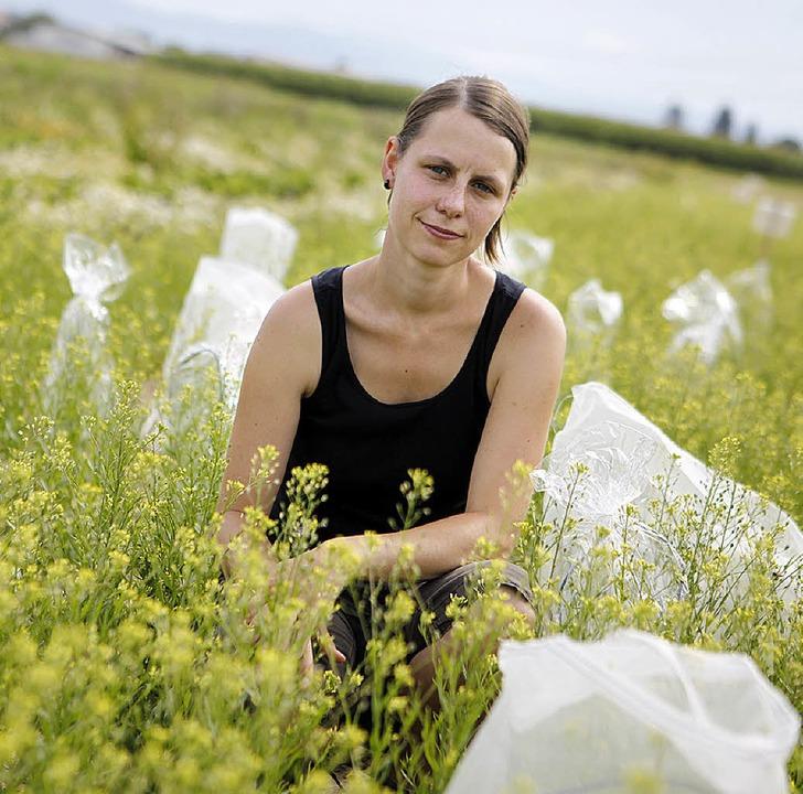 Janna Groeneveld hat Leindotterpflanzen verpackt.   | Foto: Christoph Breithaupt