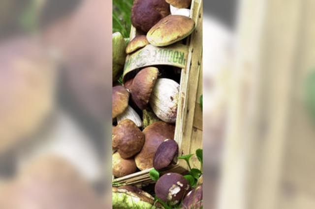 Nicht nur ein Pilz zuviel