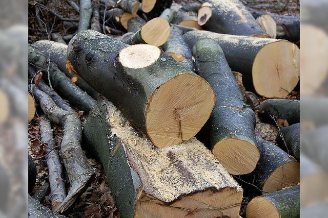Im Lörracher Stadtwald ist die Zeit der Ernte angebrochen