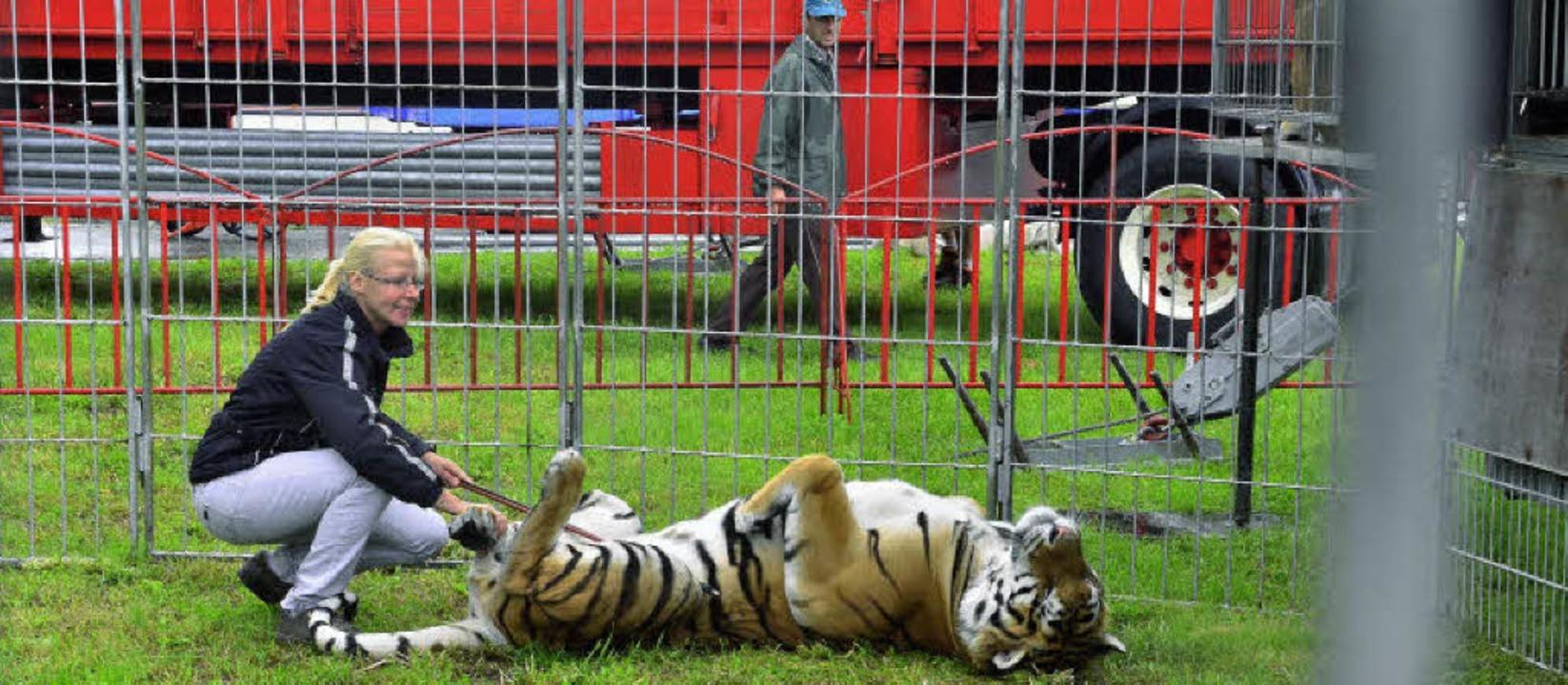 Tierlehrerin Ivonne Muderack  vom Zirk... Umgebung auf dem Festplatz vertraut.   | Foto: Dieter Erggelet