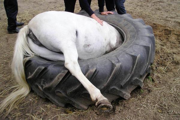 Tiere In Not Landtreff