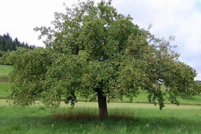 Sommer 2011: Viel mehr Obst, als üblicherweise