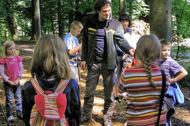 Auf der Pirsch im Rickenbacher Wald