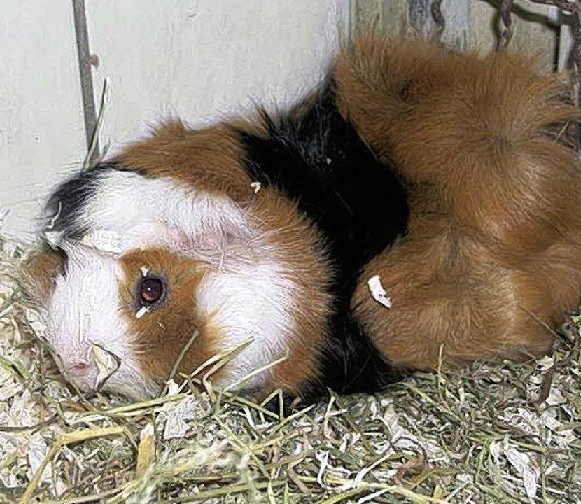 Auch Kleintiere werden in der Tierherberge versorgt.  | Foto: Tierherberge