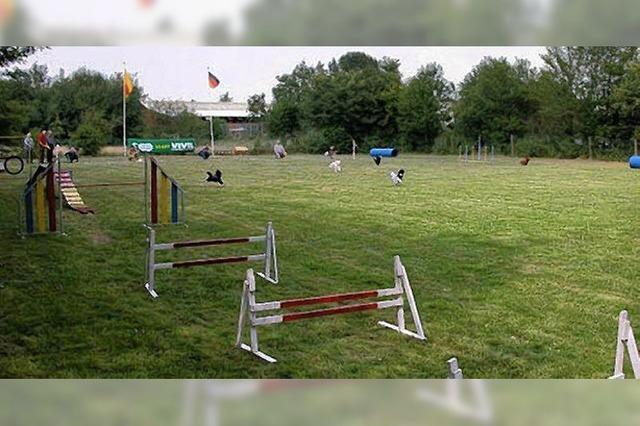 Ortenauer Dog-Racing: Schnellster Hund gesucht