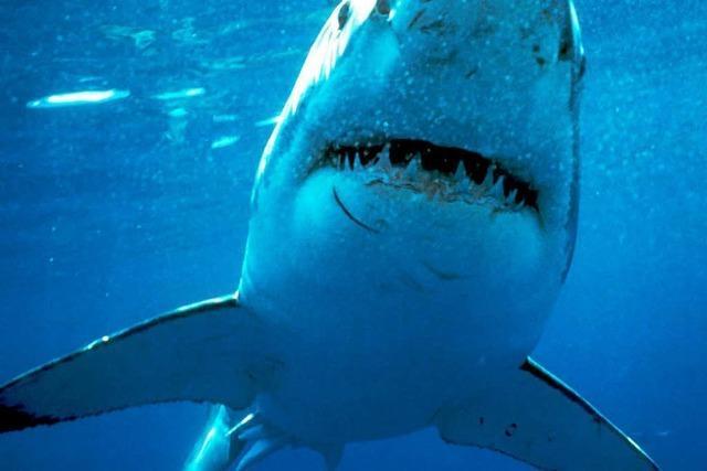 Hai-Attacken in Russlands Fernem Osten