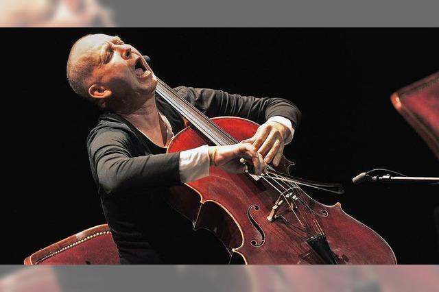 Das Cello lacht und brüllt
