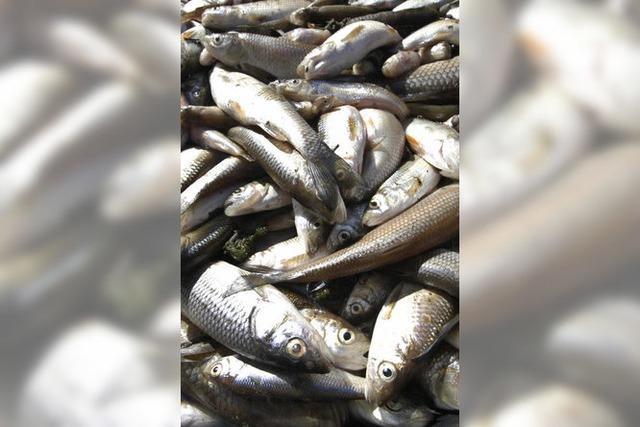 Mysteriöses Fischsterben bei Oberwolfach