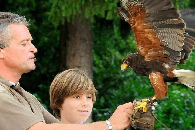 Tierische Erlebnisse im Vogelpark Steinen
