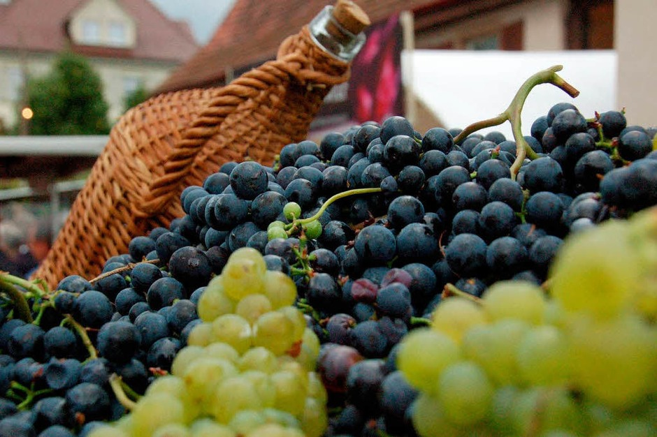 Leckere Weintrauben... (Foto: Tanja Bury)