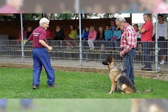 Umfassender Einblick in das Wesen der Hunde