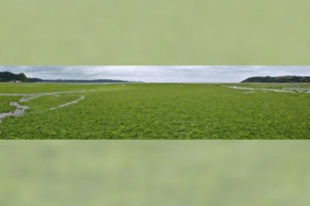 Das giftige Agrarprodukt