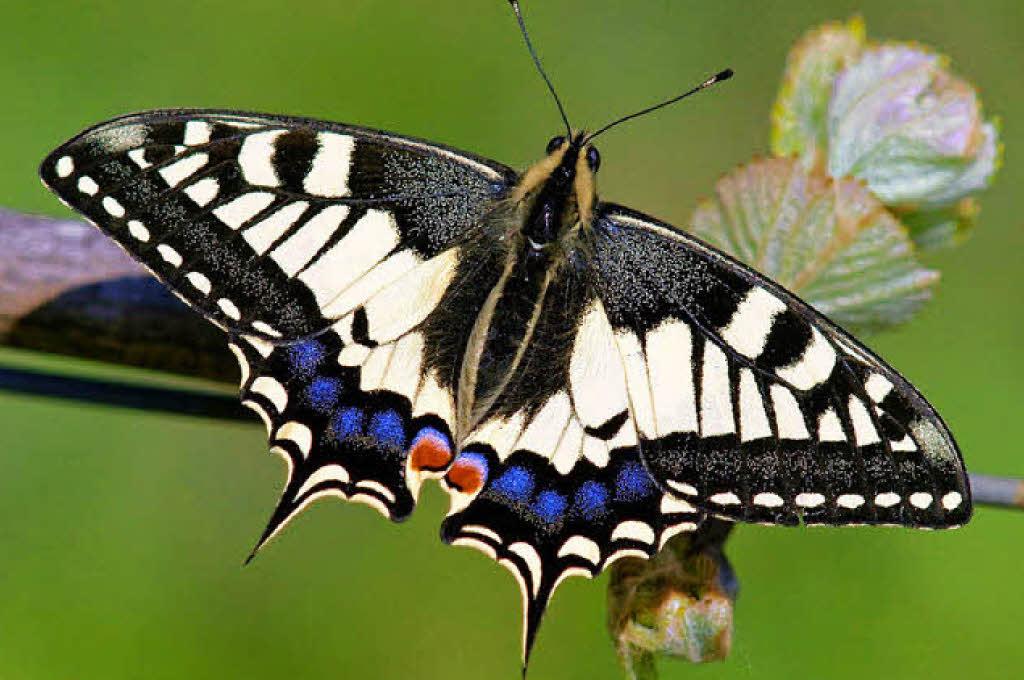 naturzeit er fliegt auf flieder fenchel karotten und