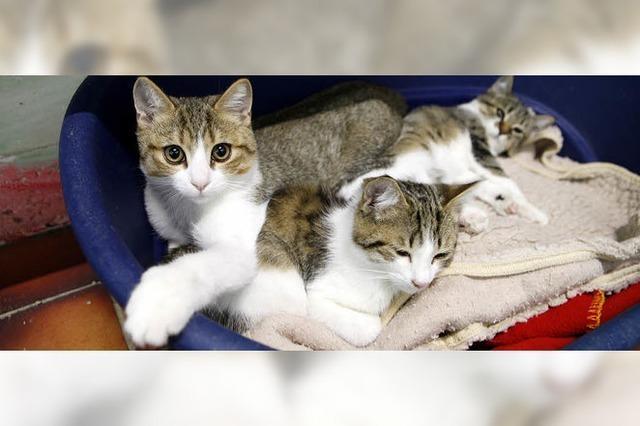 Neubau einer Quarantänestation für Katzen steht an