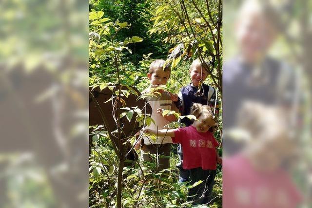 Kindergarten in den Wald verlegt