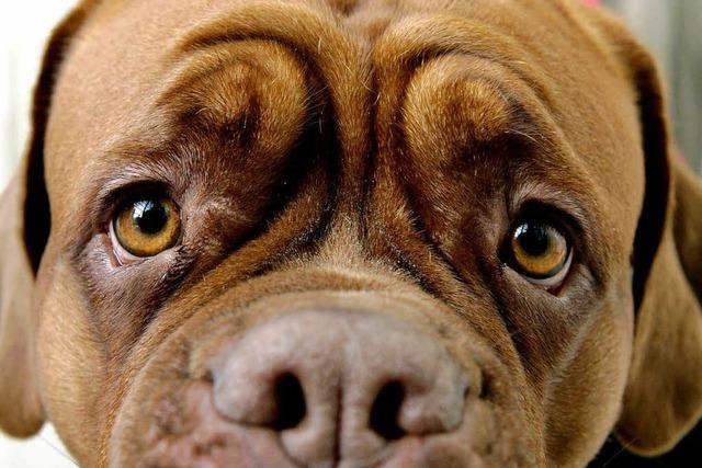 Tierschutz – in Polen ein Fremdwort?