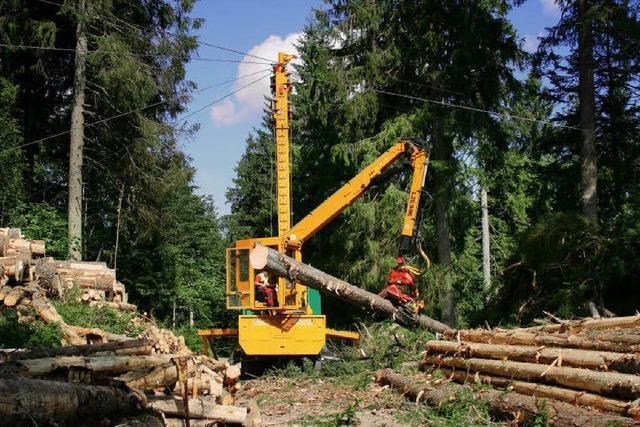 Waldtag in Oberprechtal