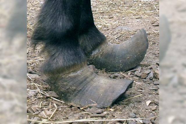 Pony Melly findet im Hof Kunterbund Hilfe und Asyl