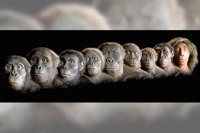 Lebewesen zwischen Affe und Mensch