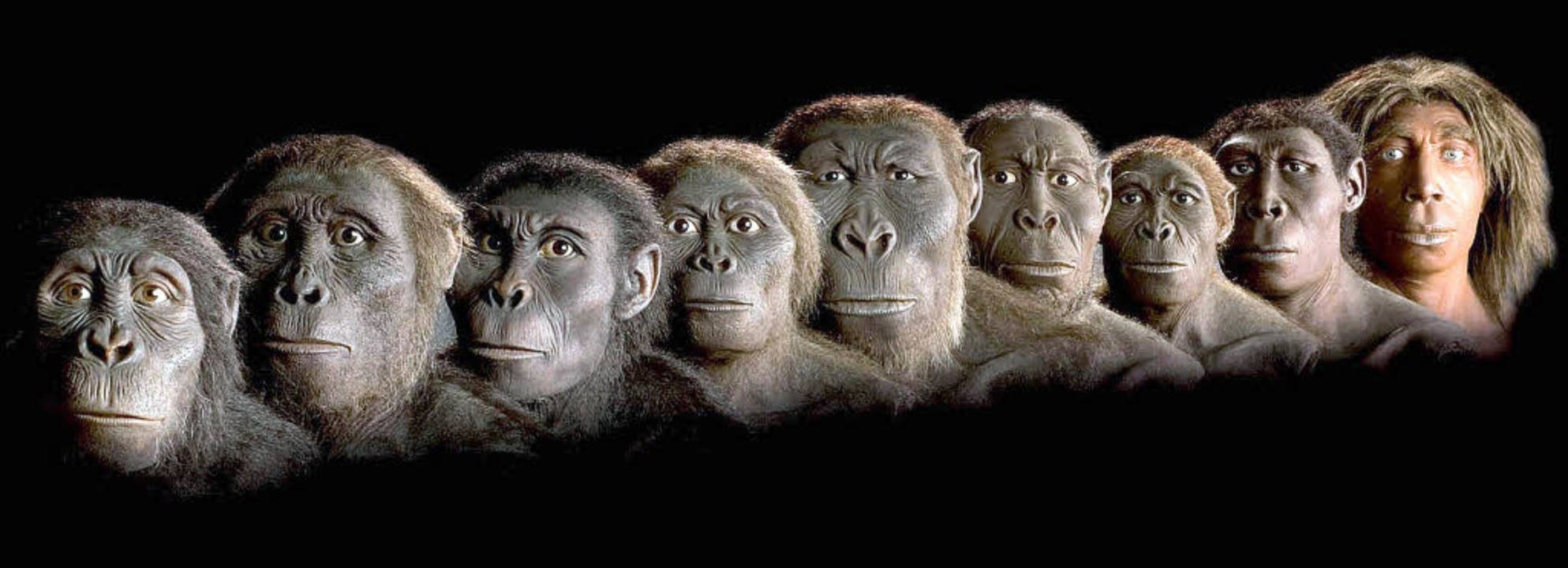 Entwicklung Affe Mensch