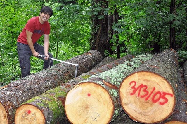 In Japan geht niemand in den Wald