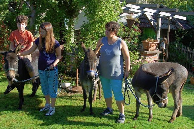 Museums- und Eselsfest