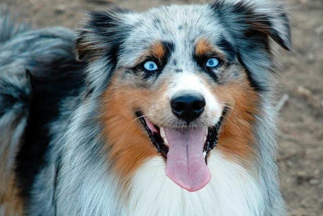 Rettungshund Sky erschnüffelt Vermisste – Erfolg bei Suchaktion