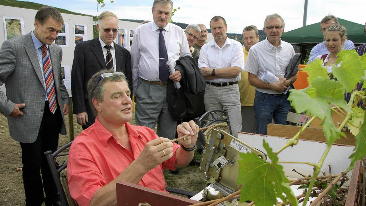 Gundram Dreher zeigt Weinexperten in s...in Auggen, wie er Rebsorten veredelt.   | Foto: Umiger