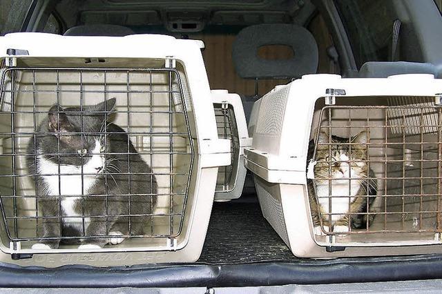 Mehr als 40 verwilderte Hauskatzen kastriert