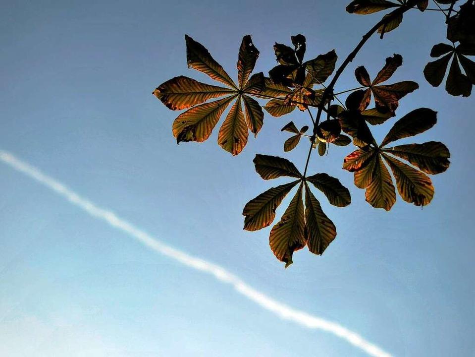 Schönes Herbstwetter erwartet die Pilger in Freiburg.  | Foto: dpa
