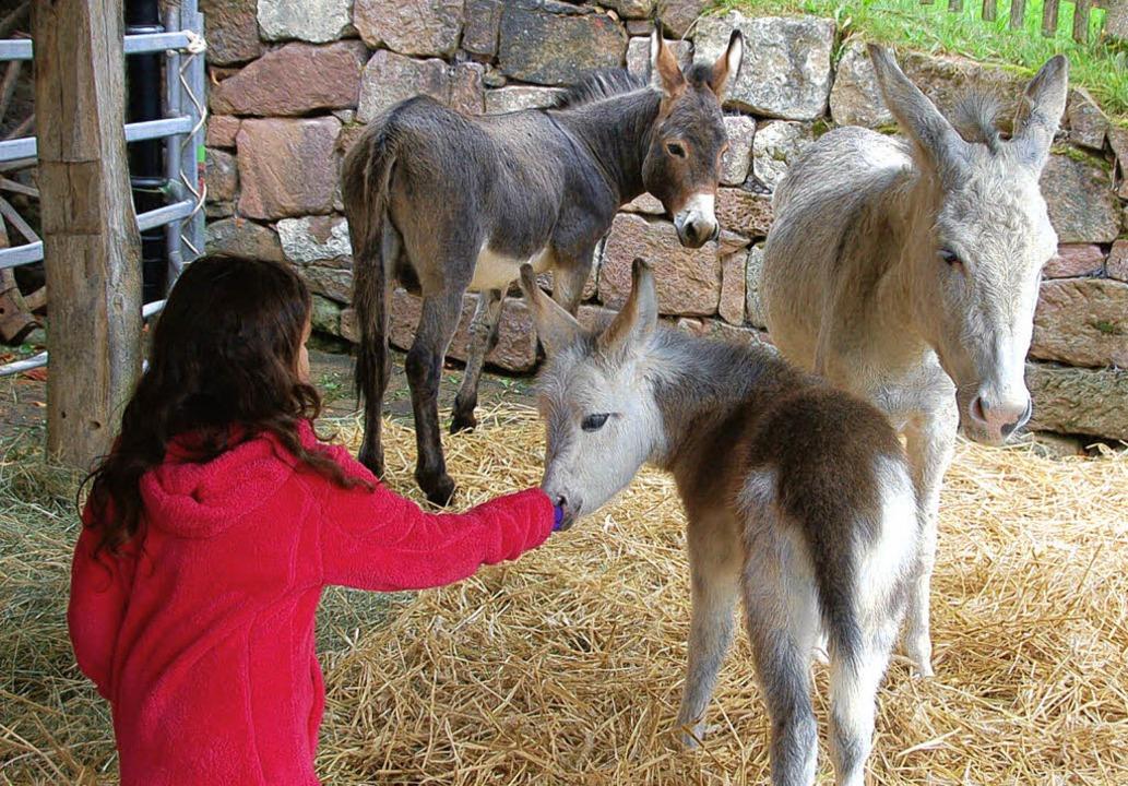 Nicht nur für die Kinder waren die Ese...kt des Museumsfestes auf dem Freihof.   | Foto: Pia Grättinegr