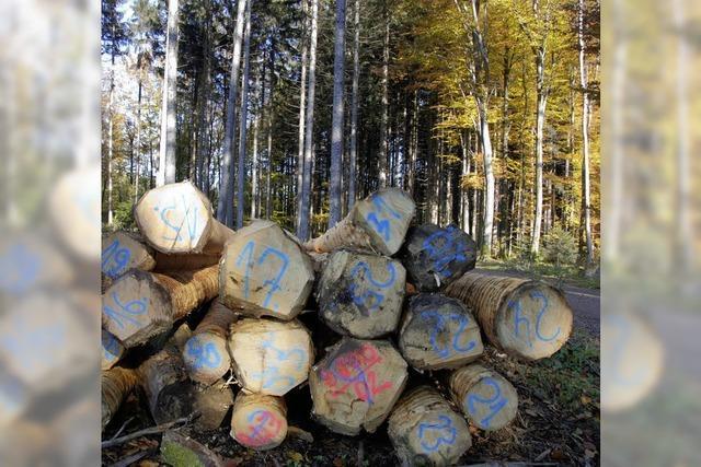Wald in Horben mit Überschuss von 1737 Euro