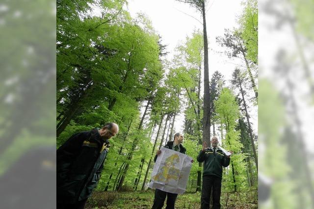 Verjüngungskur im Wald