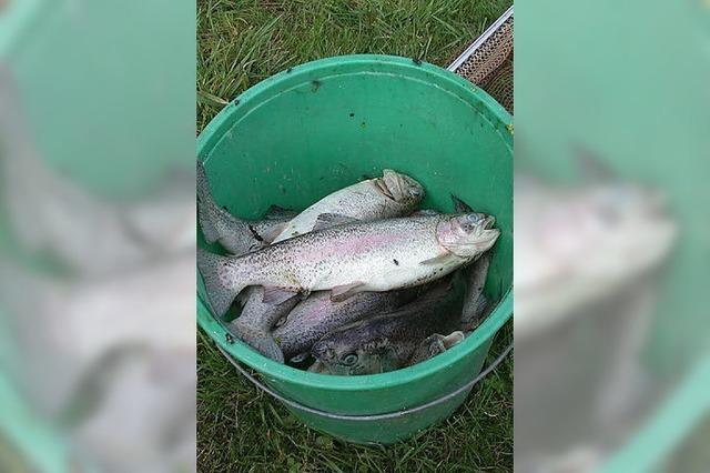 Fischsterben in der Wolf bleibt ein Rätsel